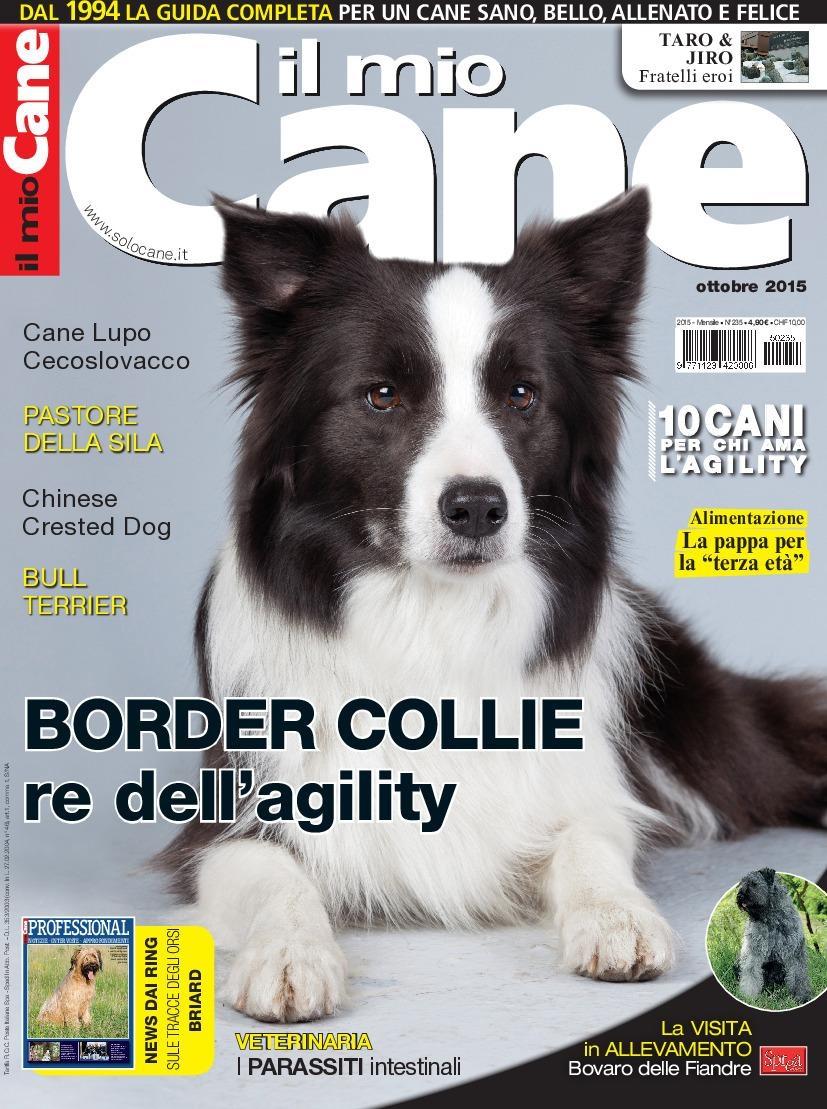 Border Collie Cane Cucciolo-COMPLETO contati Punto Croce Kit